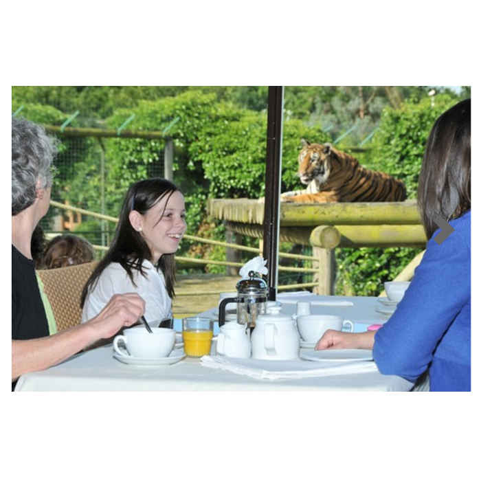 BuyAGift-tea-with-tigers